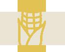 icon_uprawy_kukurydza.png